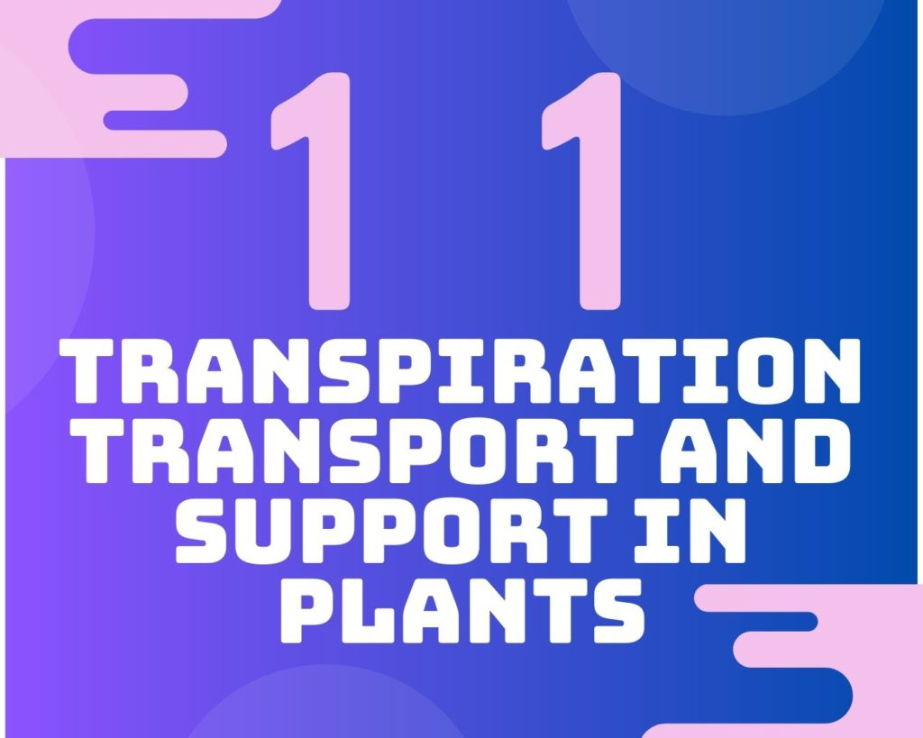 11 Transpiration, transport and support in plants